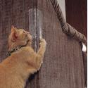 Gomaomi auto-adhesivo gato que rasca muebles Protector sofá Protector para muebles de almeja Mascotas